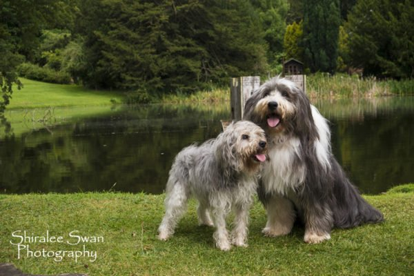 Dogs enjoy a relaxed photoshoot with Shiralee Swan photography