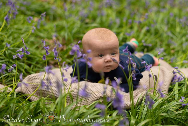 Baby bluebell photoshoot