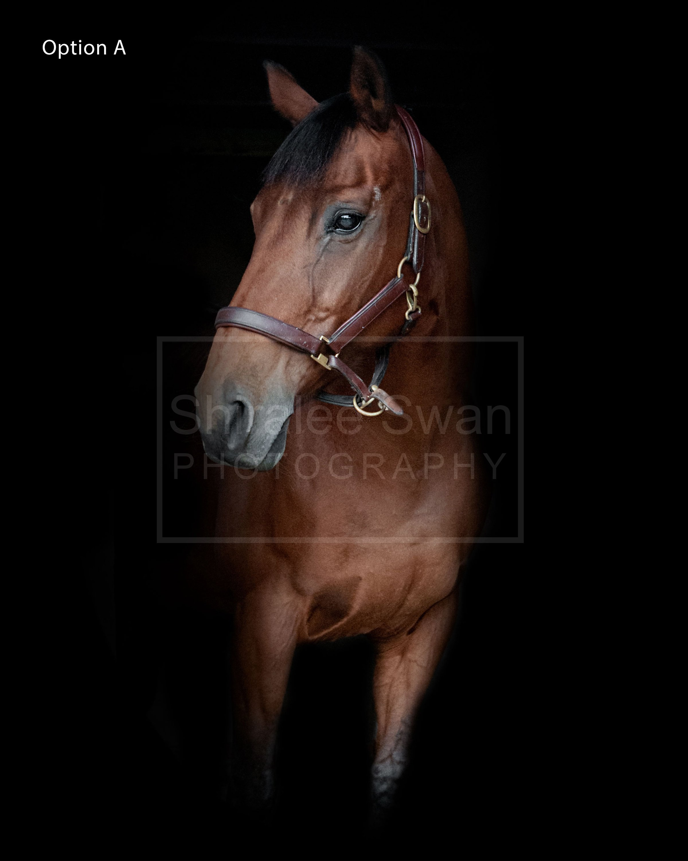 Equine Portrait option a