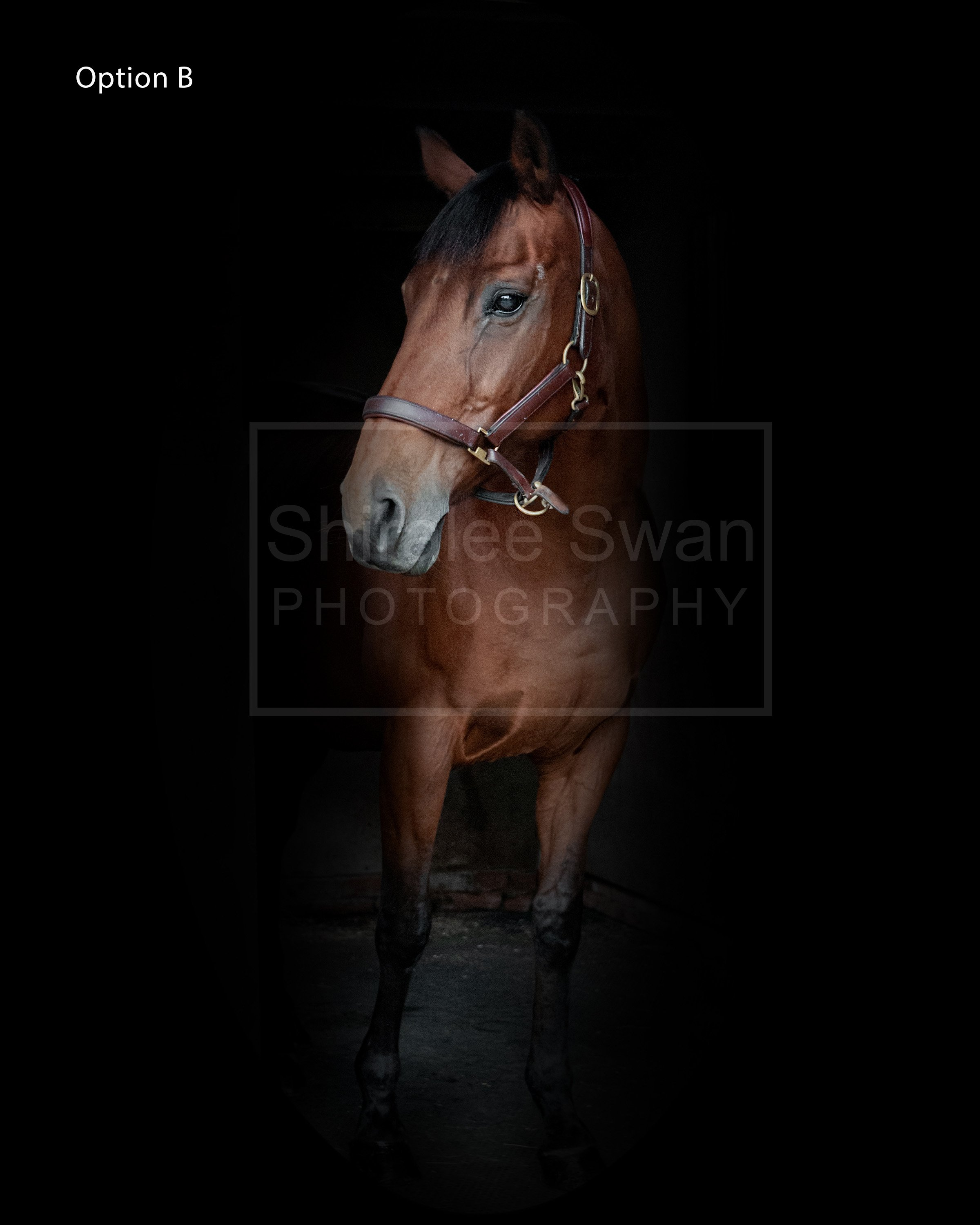 Equine Portrait option b